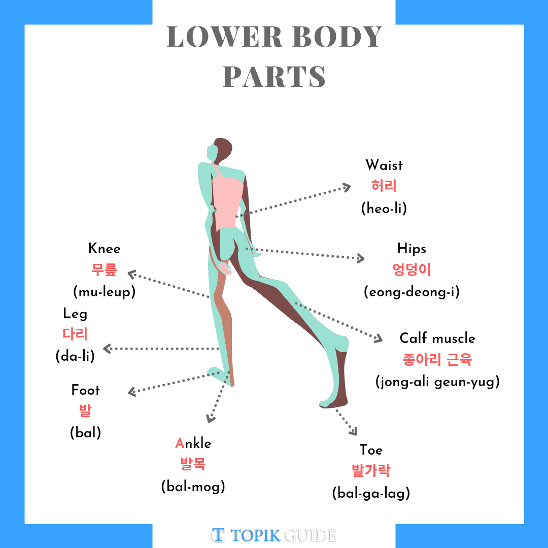 Lower body parts